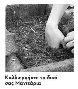 Καλλιεργήστε τα δικά σας μανιτάρια